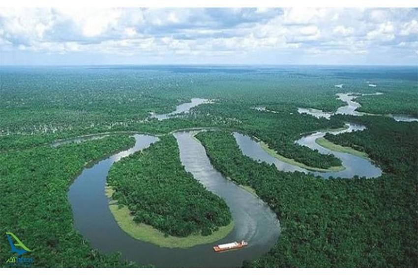 ایمیزون کا جنگل